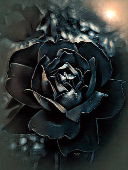 Midnight Rose by Artful Oasis