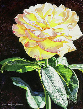 David Lloyd Glover - Midnight Rose