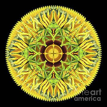 Midsummer Sun Disk by Karen Jordan Allen