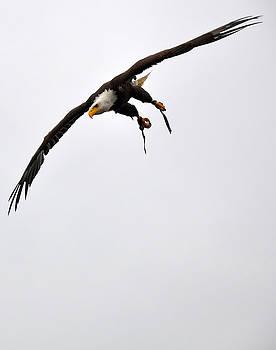 Mighty Eagle Sweet Freedom by Caroline Reyes-Loughrey