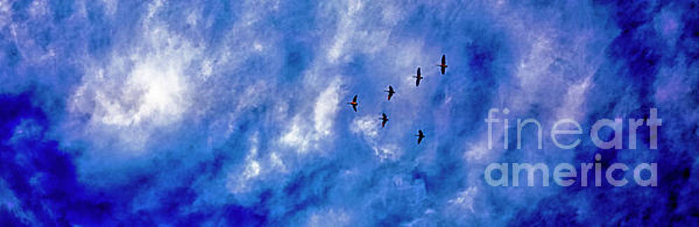 Migrating Geese  by Tom Jelen