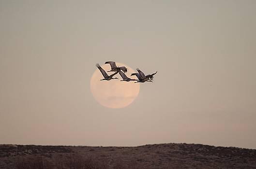 Migration by James Petersen