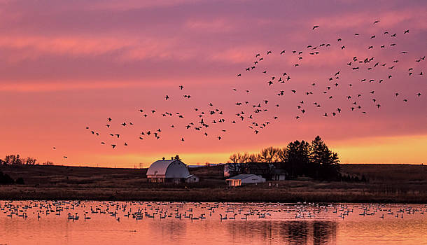 Migration  by Kelly Marquardt