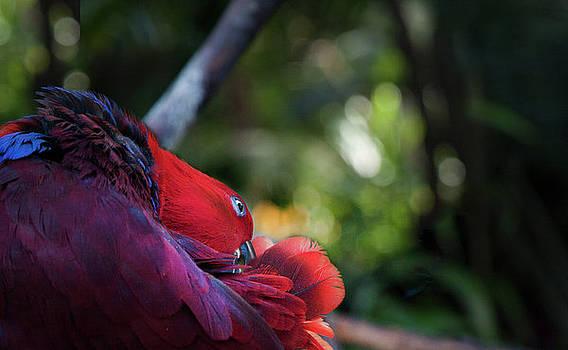 Miksang 4 Parrot by Theresa Tahara