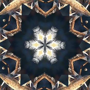 Valerie Kirkwood - Milkweed Kaleidoscope