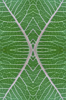 Paul Rebmann - Milkweed Veins Quad