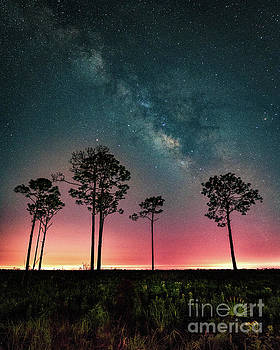 Milky Way over Myakka River State Park by Damon Powers