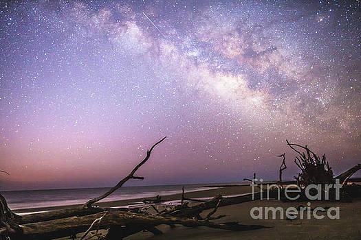 Milky Way Roots by Robert Loe