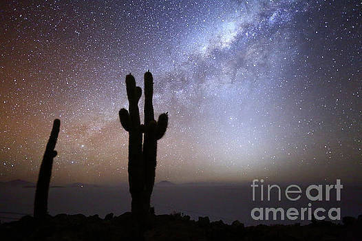 Milky Way Zodiacal Light and Cacti Silhouettes Incahuasi Island Bolivia by James Brunker