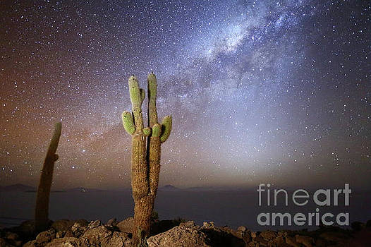 Milky Way Zodiacal Light and Echinopsis Cacti Incahuasi Island Bolivia by James Brunker