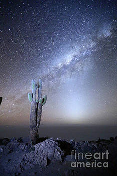 Milky Way Zodiacal Light and Giant Cactus Incahuasi Island Bolivia by James Brunker