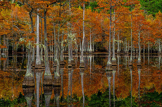 Mill Pond Reflections by Eric Albright