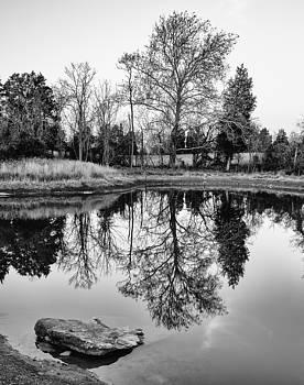 Miller's Pond by Georgette Grossman