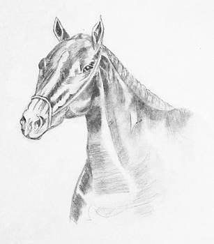 Miner's Horse 2 by Ramon Bendita