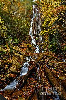 Dave Bosse - Mingus Falls