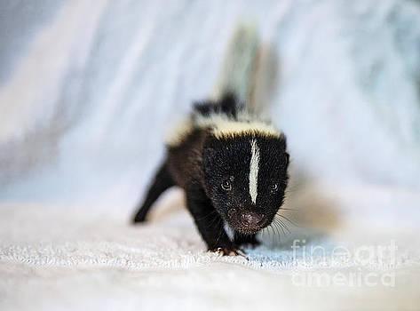 Mini Furball by Nina Stavlund
