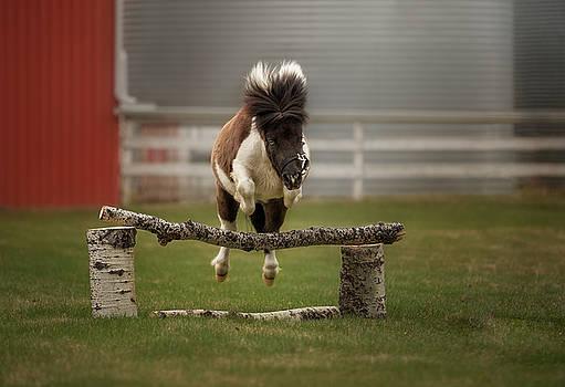 Mini Jumper by Debby Herold