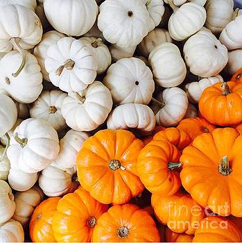 Onedayoneimage Photography - Mini Pumpkins