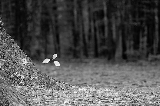Mini Tree by Ken Kartes