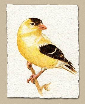 Miniature American Goldfinch by Cate McCauley
