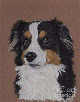 Miniature Australian Shepherd by Sherry Goeben