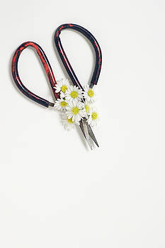 Miniature Daisies and Vintage Scissors by Di Kerpan