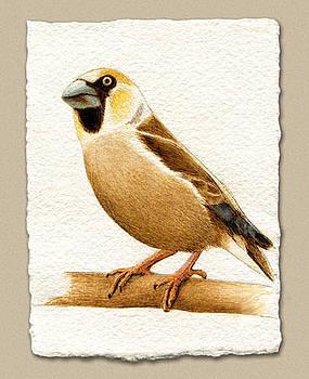 Miniature European Haw Finch by Cate McCauley