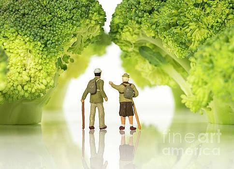 Compuinfoto - miniature figures walking on broccoli trees