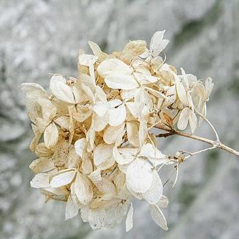 Minimalist Nature!  #vsco #vscocam by Shivendra Singh