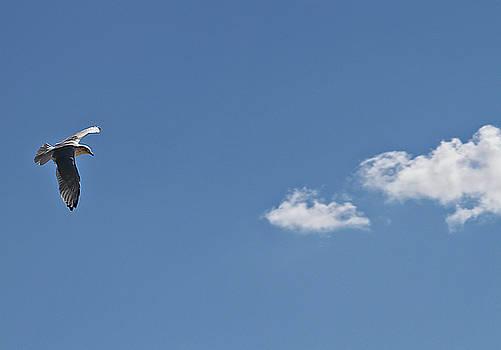 Minimalist Seagull by Bob Slitzan