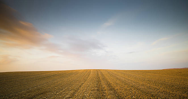 Minimalistic landscape with Meadow wheat field by Michalakis Ppalis