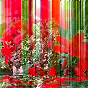 Mirage by Carolyn Repka
