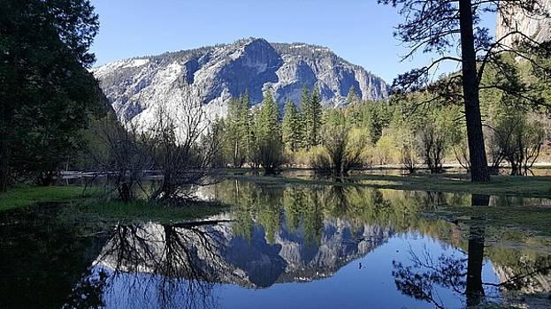 Mirror Lake at Yosemite National Park  by Neal David Reilly