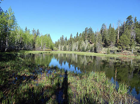 Mirror Lake by Jennifer Kelly