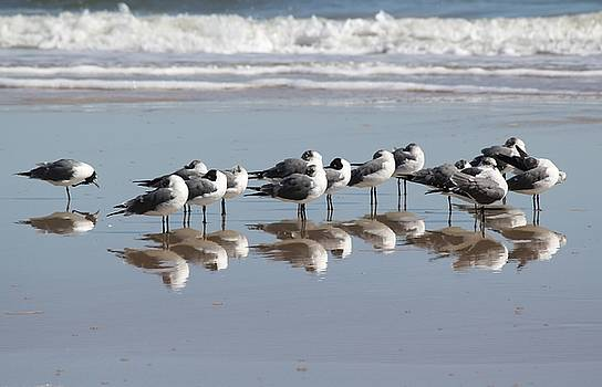 Mirrored Flock by Theresa Willingham