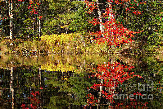 Mirrored Foliage Reflection by Denise Lilly