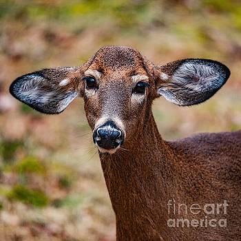 Miss Deer 1 by Buddy Morrison