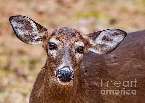 Miss Deer by Buddy Morrison
