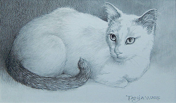 Miss Kitty by Tanja Ware