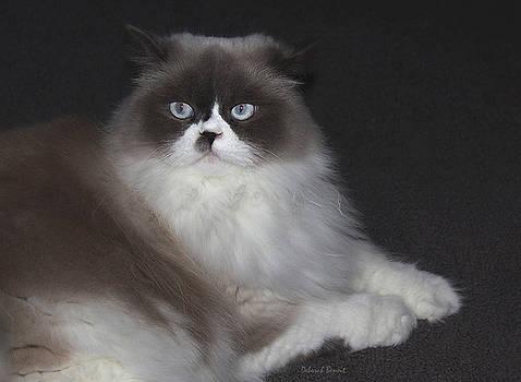 Deborah Benoit - Miss Lillie The Kitty
