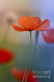 Miss Poppy by Ines Leonardo