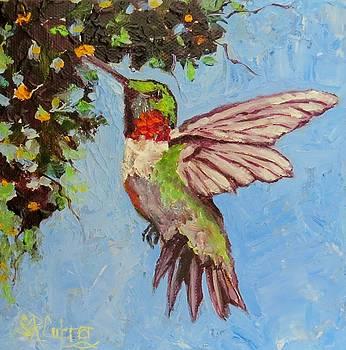 Miss Scarlet hummingbird by Sandra Cutrer