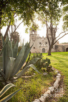 Mission Conception Cactus Garde by Iris Greenwell
