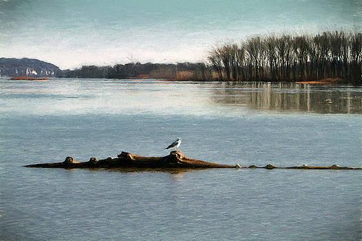 Mississippi Gull by John Freidenberg