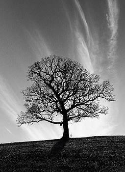 Missouri Treescape by Christopher McKenzie