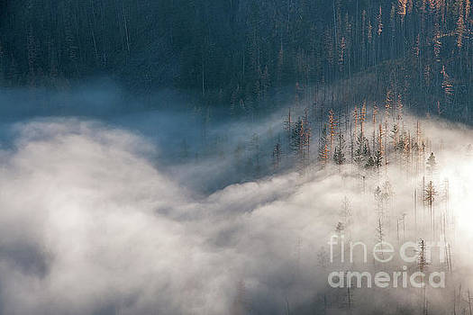 Mist and Shadow by David Emond