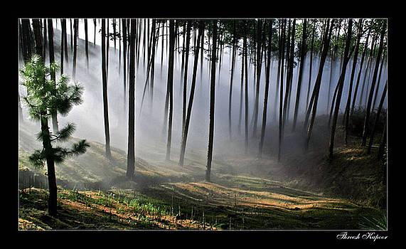 Mist-in-pines by Threesh Kapoor