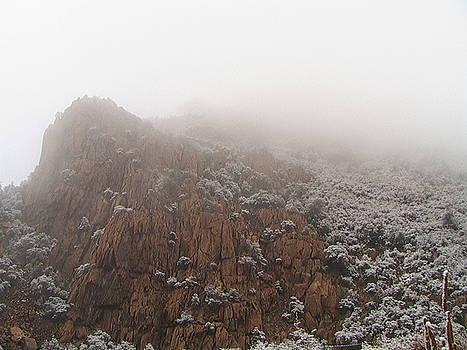 Mist On Mingus by Suki DeJong