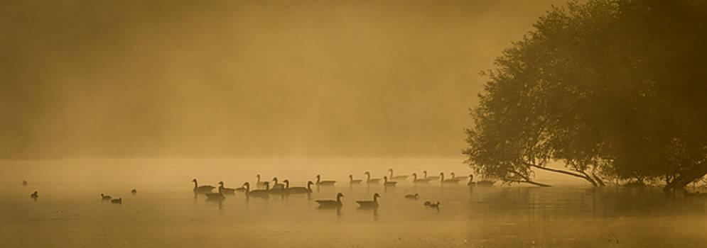 Mist on water by Martin Griffett