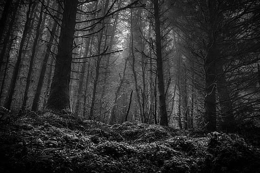 Misty Ballycastle Forest by Alex Leonard